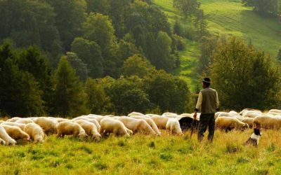One Flock, One Shepherd