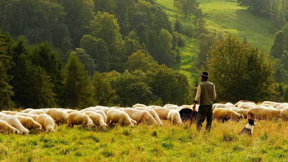 One Flock, One Shepherd
