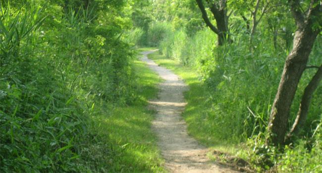 A Predictable Path